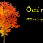 Az ősz pozitív oldala