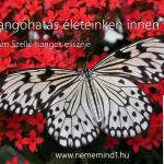 Hangos Fogolyán Szellő (Harangi Emese) írások 11, Pillangóhatás életeinken innen és túl (Esszé)
