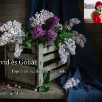 Dávid és Góliát (Fogolyán Szellő igaz története)