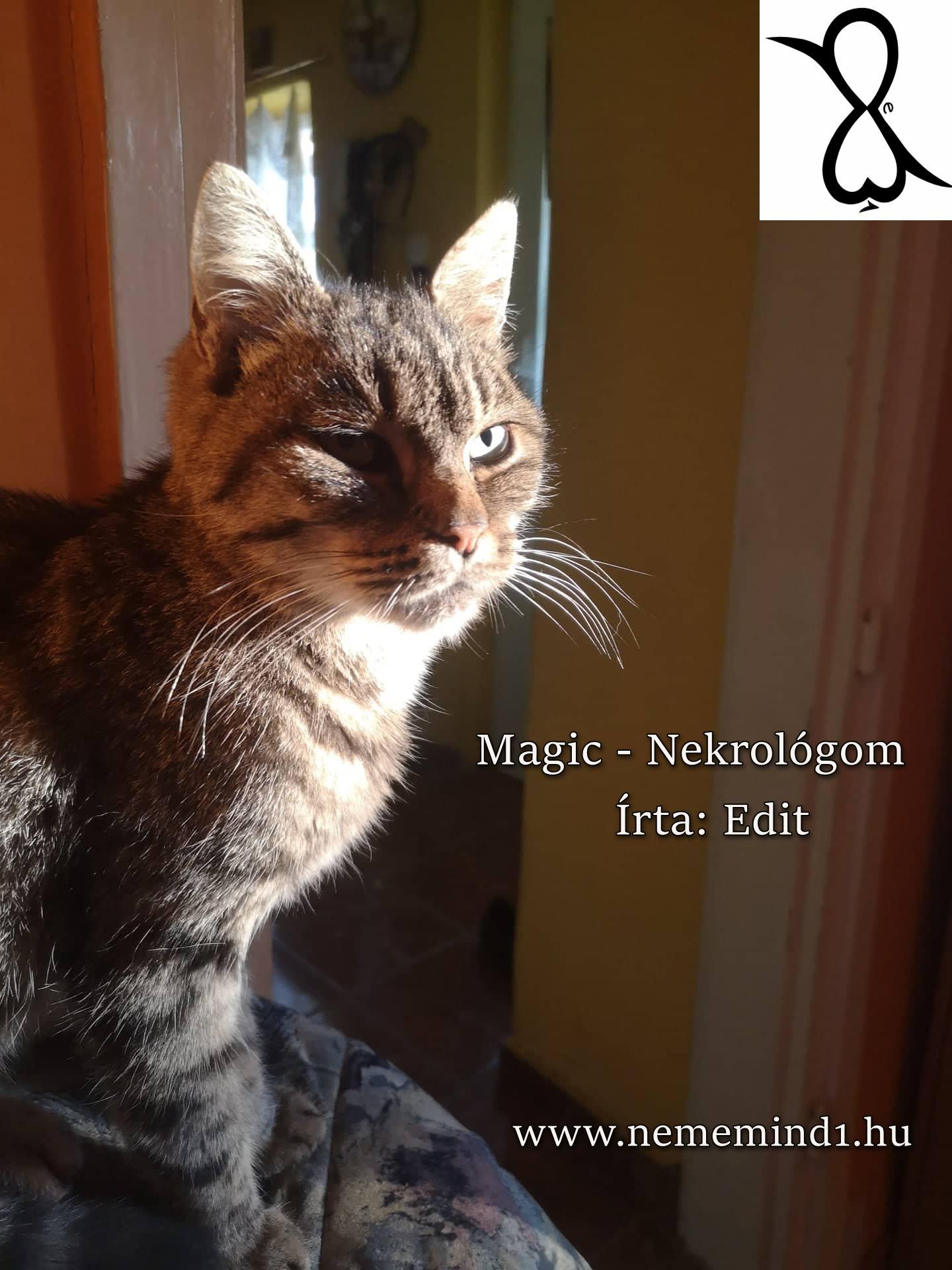 Magic-Nekrológom (Írta: Edit)